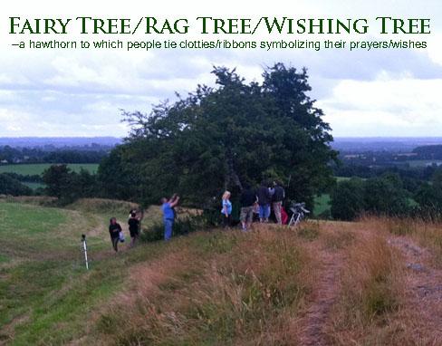 Fairy Trees in Ireland